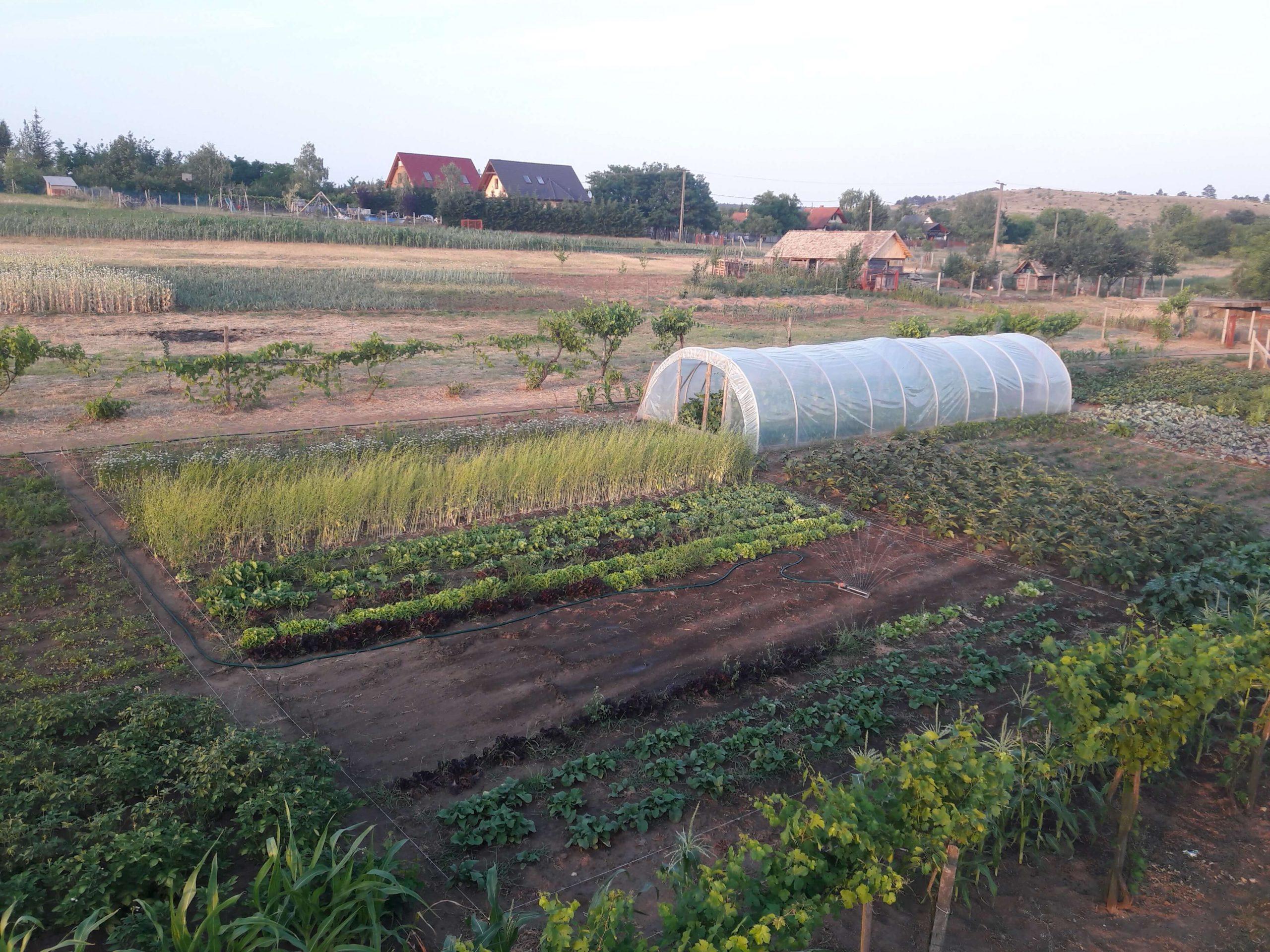 Növénytermesztés