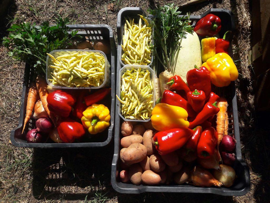 zöldségközösség